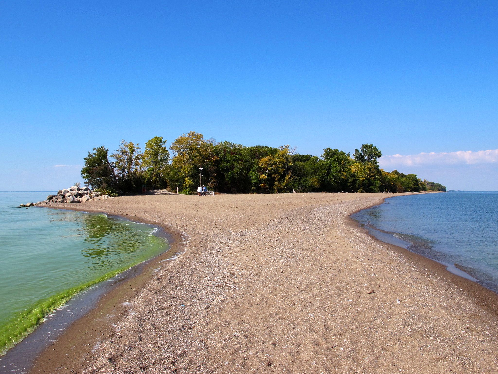 Algae at Point Pelee Beach