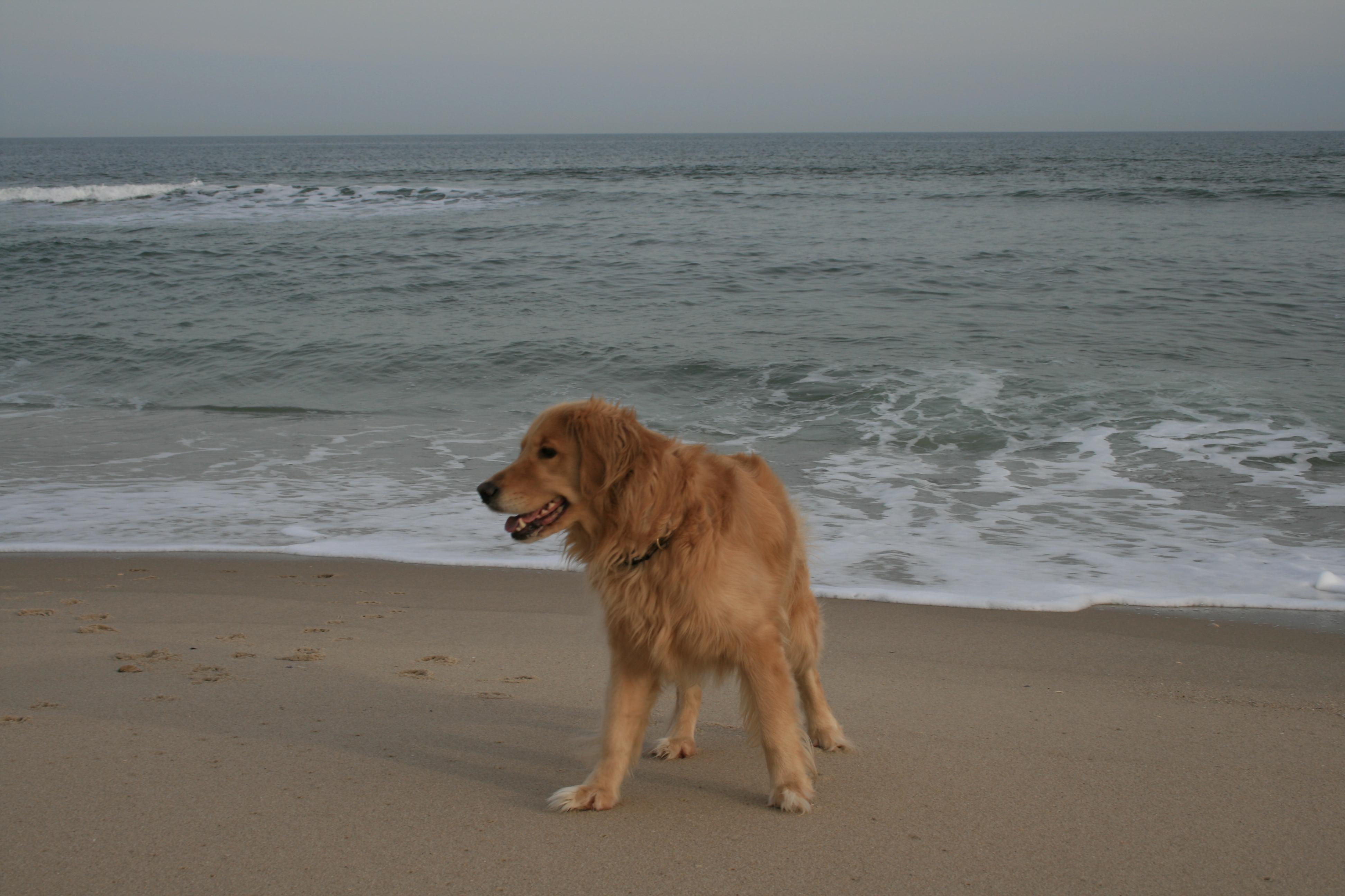 dog waste, beach, dogs